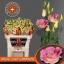 product/img.ozexport.nl/LEUSMEGLIGC-LIVE_fotos-0x61C85BFEA405A2F0D408FE0F55255AF5B2C38AF3.jpg