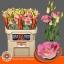 product/img.ozexport.nl/LEUSMEGLIGC-LIVE_fotos-0x85FDBDD71AE22C687B557C8A8F90F8A98415F2AC.jpg
