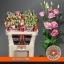 product/img.ozexport.nl/LEUSROROP-ASSORTI_fotos-Assorti-Wijk - Waalzicht - Lisianthus du rosita pink.jpg