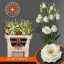 product/img.ozexport.nl/LEUSROW-LIVE_fotos-0xF71CA771B9BFDD094B9474223DFBB28C712461A5.jpg