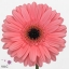 product/img.ozexport.nl/LGERPREI-ART_fotos-VBN100000-vbn102312.jpg