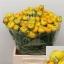 product/img.ozexport.nl/LRANKO-LIVE_fotos-0x8B1EC15318B424FEC10EA85284F4026A1195776C.jpg