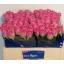 product/img.ozexport.nl/RAQU5-LIVE_fotos-0xDECC054FC37896A67D64ADA7DD1BCCB3DE81450B.jpg