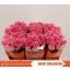 product/img.ozexport.nl/RAVAH5-LIVE_fotos-0x72DA56AE42C86107F38264773C0732471EB6FD1F.jpg