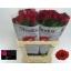 product/img.ozexport.nl/RRHO7-LIVE_fotos-0x83E3EF2D271BD655FC2CEC0DC6CD33DF73B24534.jpg