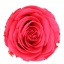 PRZ1490-01-rosa-tallo-standard.jpg
