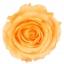 PRZ1550-01-rosa-tallo-standard.jpg