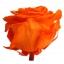 PRZ7530-02-rosa-tallo-premium.jpg