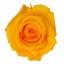 RME3350-01-rosa-medium.jpg