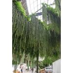 preserved greens