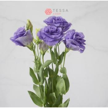 Purple Lisianthus 2.jpg