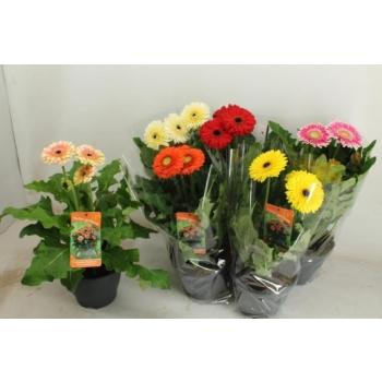 product/img.ozexport.nl/103176-23-LIVE_fotos-0x0A054852F0BB93B54E148C84910797893BAAC0C3.jpg