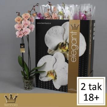 product/img.ozexport.nl/112901-12-LIVE_fotos-0x2CBC527185584CF00DC266362CC268092D295848.jpg
