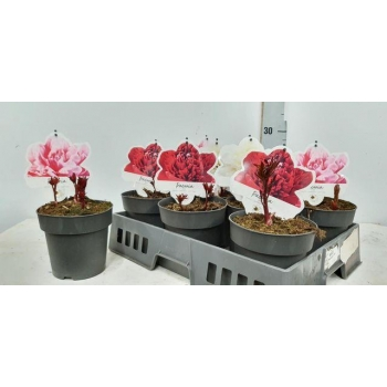 product/img.ozexport.nl/118308-15-LIVE_fotos-0x14F3B3B183DDB9A41B5A469F8AFD838773455610.jpg
