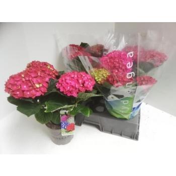 product/img.ozexport.nl/121683-15-LIVE_fotos-0x688162336F314C091CE2E5F25E4221C902982E9D.jpg