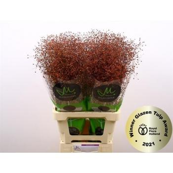 product/img.ozexport.nl/124380-70-LIVE_fotos-0x761D188332CA44CD58242248709D5B7526C9346D.jpg