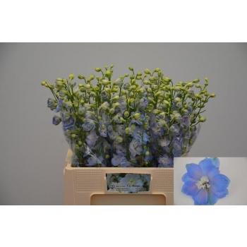 product/img.ozexport.nl/13605-60-LIVE_fotos-0xF2FD08FA6F343E18C9367E1E6513943A51598B42.jpg