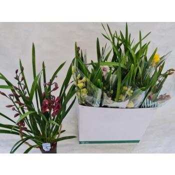 product/img.ozexport.nl/18459-14-LIVE_fotos-0x554F65E9CD8E4A00FB2FF43CA722328BE6FE6267.jpg