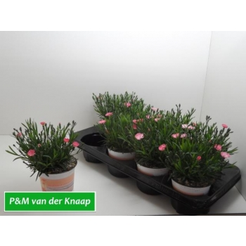 product/img.ozexport.nl/360812-12-LIVE_fotos-0xBAF0BFDFC1FA8F01A05CD0D051BAD9650E78367F.jpg