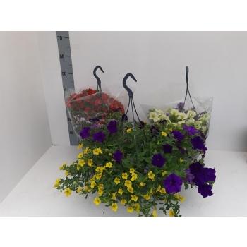 product/img.ozexport.nl/AMPMIX27-LIVE_fotos-0x678EA191B516697190F81782939FA12A25332320.jpg