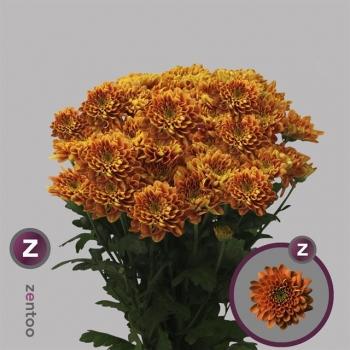 product/img.ozexport.nl/CHRBAR-LIVE_fotos-0x16A70E8D387BC60B05D434D6866D48B9DFE63C6B.jpg