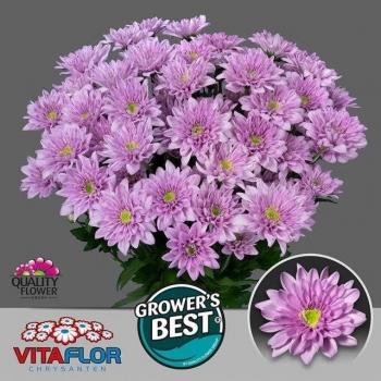 product/img.ozexport.nl/CHRFIA-LIVE_fotos-0xF306F58FDAE7F7E71888B0B075B7A2BEB4056367.jpg