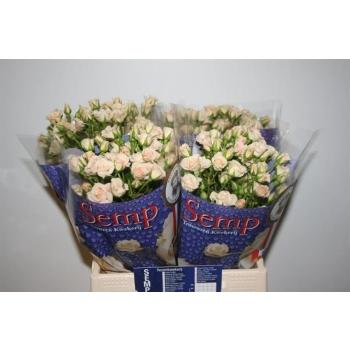 product/img.ozexport.nl/KRCREG4-LIVE_fotos-0x671321B8BC0539438FCE556D825BB024AC31149F.jpg