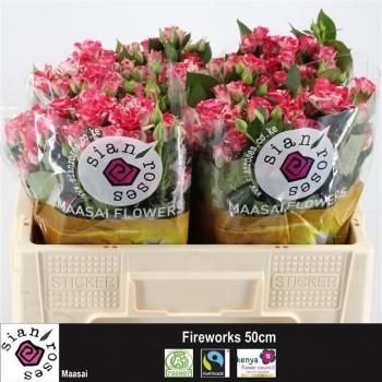 product/img.ozexport.nl/KRFIRE5-LIVE_fotos-0xA095F9290757F1398FD713FEC992AEF638F5052D.jpg