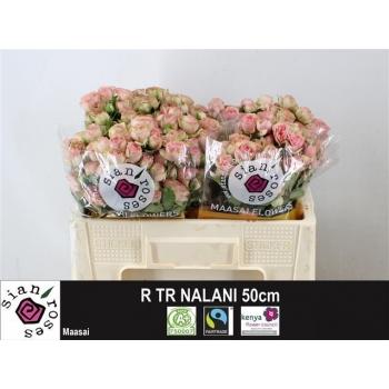 product/img.ozexport.nl/KRNAL5-LIVE_fotos-0xDD0536D46B0BB1A1EEC9A5D2C1FFEFA7252C91EB.jpg