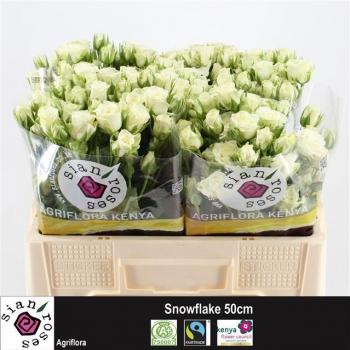 product/img.ozexport.nl/KRSNO5-LIVE_fotos-0xE4CF2E7DEF377CE8FFECDCEFED3FB821E488FE74.jpg