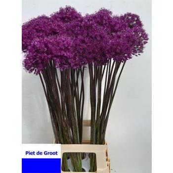 product/img.ozexport.nl/LALLPURS65-LIVE_fotos-0x30D9B724F11514211F053B14DB6BB54A053A54CA.jpg