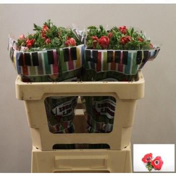 product/img.ozexport.nl/LANEPU-LIVE_fotos-0x85F34084457D057F82D856EA1A8BD6C74B635E8E.jpg