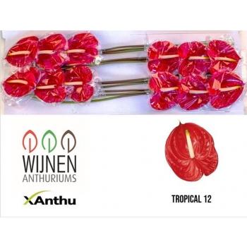 product/img.ozexport.nl/LANTTR-LIVE_fotos-0xECA056187B779D538514A154860580BF03F64441.jpg