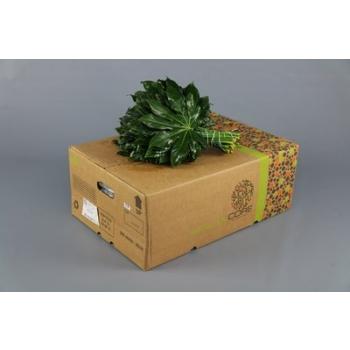 product/img.ozexport.nl/LARA-LIVE_fotos-0xD30290DB8B7201B82ACF0632D33B8A5477D29A20.jpg