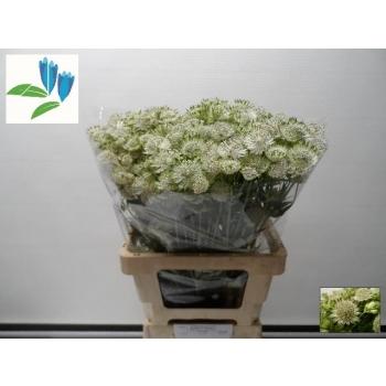 product/img.ozexport.nl/LASTVA6-LIVE_fotos-0xCB31303F172C9F6B879406BF2BF2657BCB621711.jpg