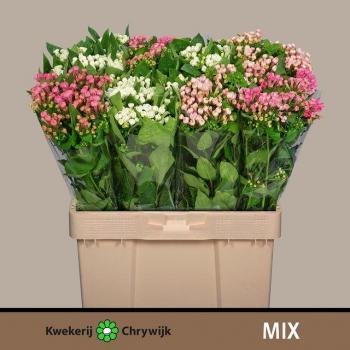 product/img.ozexport.nl/LBOU5MIX-LIVE_fotos-0x38705B873FD3C2DDC92C509A3AC9229E39EE41F7.jpg