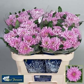 product/img.ozexport.nl/LCHRROD-LIVE_fotos-0x6BFC36920DAC0CBDBA405ACE537DF5BA0E240ED8.jpg