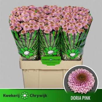 product/img.ozexport.nl/LCHRSANDORP-LIVE_fotos-0xB90774617C85981116CB53A8A9C33BB46D8DCFB2.jpg
