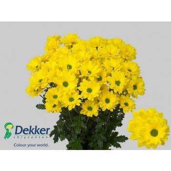 product/img.ozexport.nl/LCHRYELS-LIVE_fotos-0x6EBC13ACCDBFBB62F7AC2F6807BE434E4B1733C5.jpg