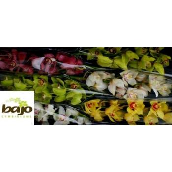 product/img.ozexport.nl/LCYM7-LIVE_fotos-0x6A560E2156719D689BF787DB38C291DB4023F055.jpg
