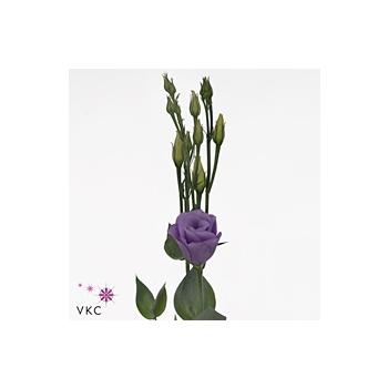 product/img.ozexport.nl/LEUSCROLAV-ART_fotos-VBN100000-vbn105357.jpg
