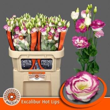product/img.ozexport.nl/LEUSEXHOL-LIVE_fotos-0x2BB601B4F4E18F256BCACC0C997967BE6E98962C.jpg
