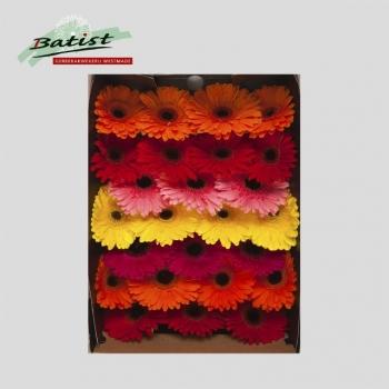 product/img.ozexport.nl/LGER4-LIVE_fotos-0xB1A7E7CC41988BA343D0335C317565E4F2A0B839.jpg