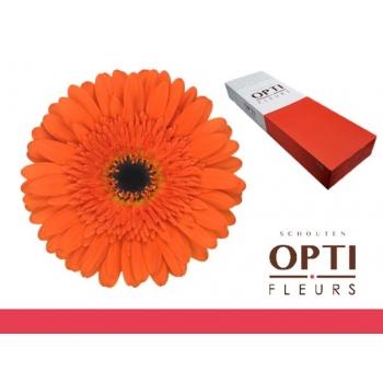 product/img.ozexport.nl/LGERCAN-LIVE_fotos-0x2A44C3EDE5761AB593281D5602DBDE1C3CA57D78.jpg