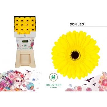 product/img.ozexport.nl/LGERDONL-LIVE_fotos-0xC9A619F2F3A65EAAC43F6336243306ADED7E72D7.jpg