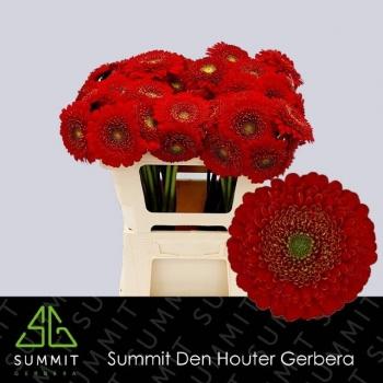 product/img.ozexport.nl/LGERMPOMBEN-LIVE_fotos-0xDB75AB8F6A3D8BB999E2E9AF48922F778310128D.jpg