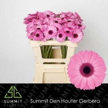 product/img.ozexport.nl/LGERMSEN-LIVE_fotos-0xC04A128F9D7B9AE2D049B2B4B3B33AA6C583CB98.jpg
