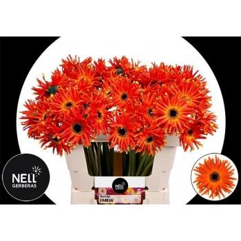 product/img.ozexport.nl/LGERPASEMI-LIVE_fotos-0xBB5BEDC0ADCCE27FFE7220EE646184DDD1CC5232.jpg