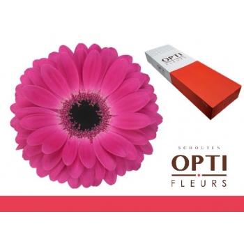 product/img.ozexport.nl/LGERRICH-LIVE_fotos-0xA7FFA135F03980B3F7C41D72C2C74D18E7AA5B8E.jpg
