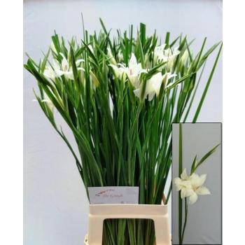 product/img.ozexport.nl/LGLAALB-LIVE_fotos-0x2098A8A985238F8588488E6299F3988FB15A3812.jpg